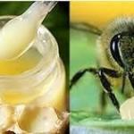 Khám phá sự kỳ diệu của sữa ong chúa