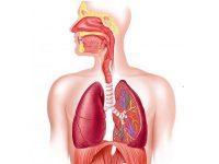 Cách chữa viêm phổi tại nhà nhanh chóng bằng cây sẵn có trong vườn