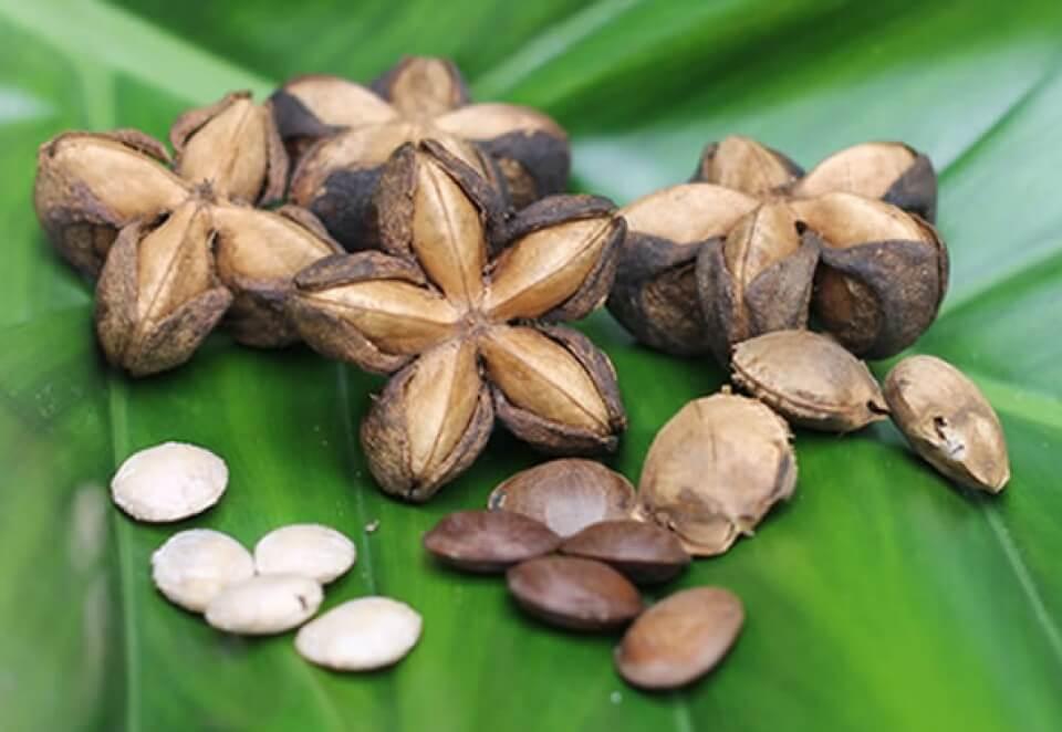Cách trồng và hiệu quả kinh tế của cây sachi