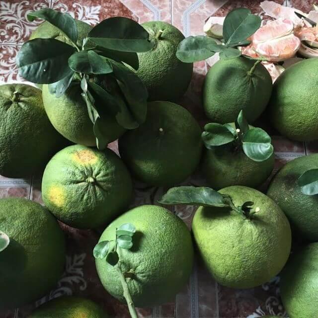 Các giống cây ăn quả miền nam thích hợp trồng ở miền bắc