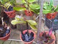 Kỹ thuật trồng và chăm sóc lan rừng chuẩn