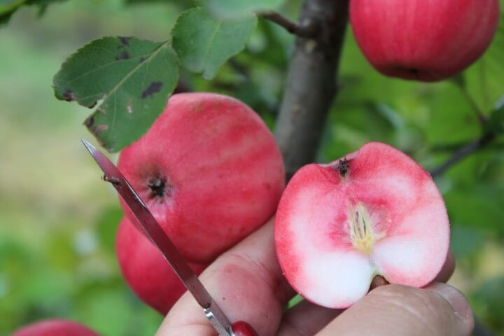 10 giống cây ăn quả dễ trồng năng suất cao