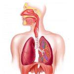 bài thuốc chữa viêm phổi