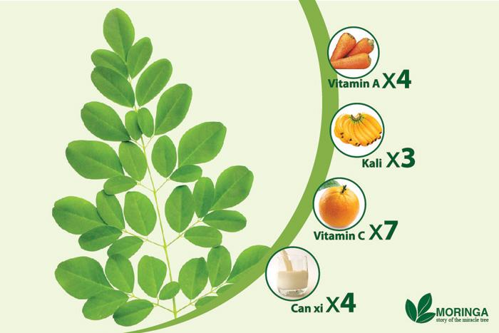 Thành phần dinh dưỡng của cây chùm ngây