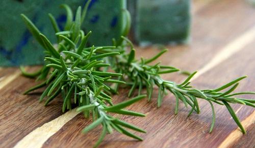 công dụng cây hương thảo